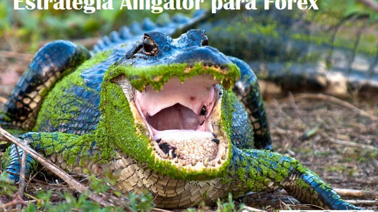 Estrategia Alligator