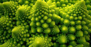 fractales de bill williams en la naturaleza