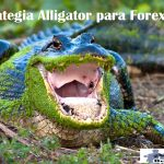 estrategia alligator para forex